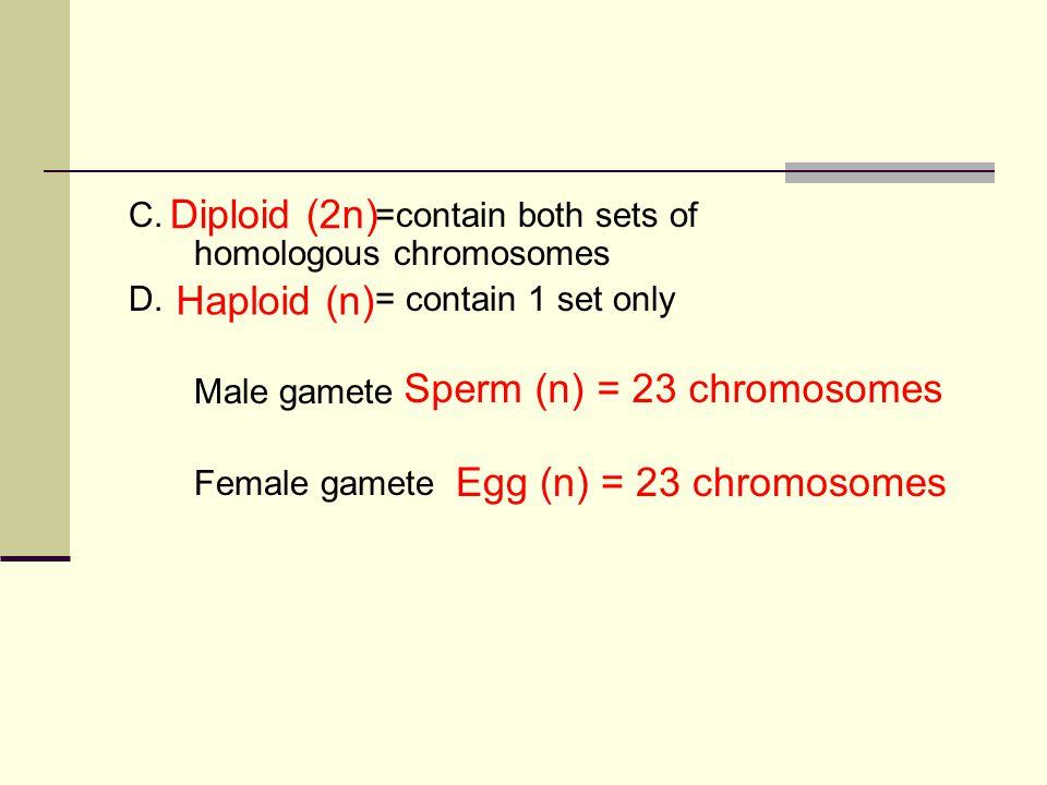 C.=contain both sets of homologous chromosomes D.