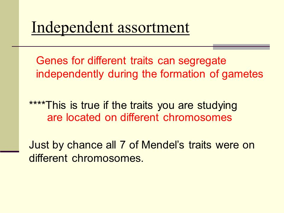 ****This is true if the traits you are studying Just by chance all 7 of Mendel's traits were on different chromosomes. Genes for different traits can