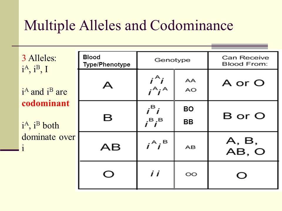 BO BB Multiple Alleles and Codominance 3 Alleles: i A, i B, I i A and i B are codominant i A, i B both dominate over i Blood Type/Phenotype