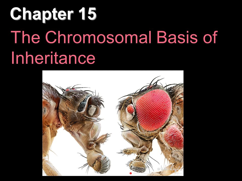 A monosomic zygote has only one copy of a particular chromosome Turner's syndrome (XO)
