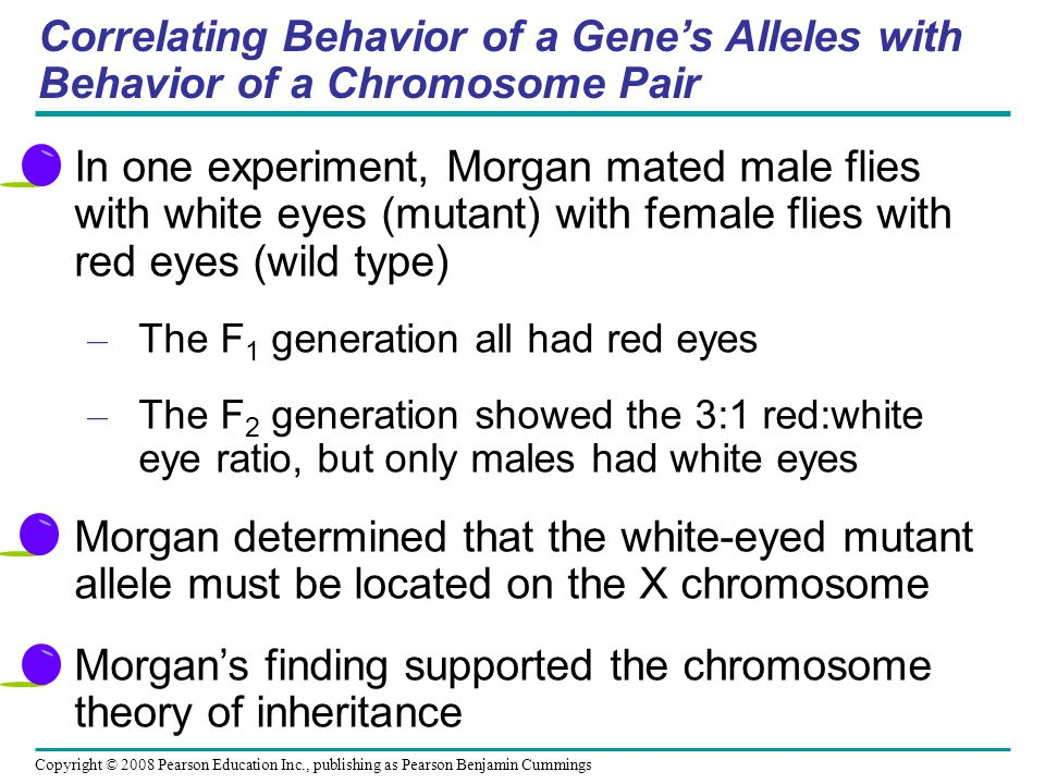 Correlating Behavior of a Gene's Alleles with Behavior of a Chromosome Pair In one experiment, Morgan mated male flies with white eyes (mutant) with female flies with red eyes (wild type) – The F 1 generation all had red eyes – The F 2 generation showed the 3:1 red:white eye ratio, but only males had white eyes Morgan determined that the white-eyed mutant allele must be located on the X chromosome Morgan's finding supported the chromosome theory of inheritance Copyright © 2008 Pearson Education Inc., publishing as Pearson Benjamin Cummings