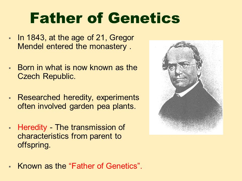 Father of Genetics  In 1843, at the age of 21, Gregor Mendel entered the monastery.