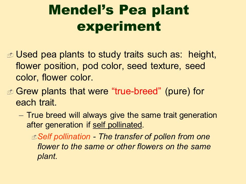 Mendel's Pea plant experiment  Used pea plants to study traits such as: height, flower position, pod color, seed texture, seed color, flower color.