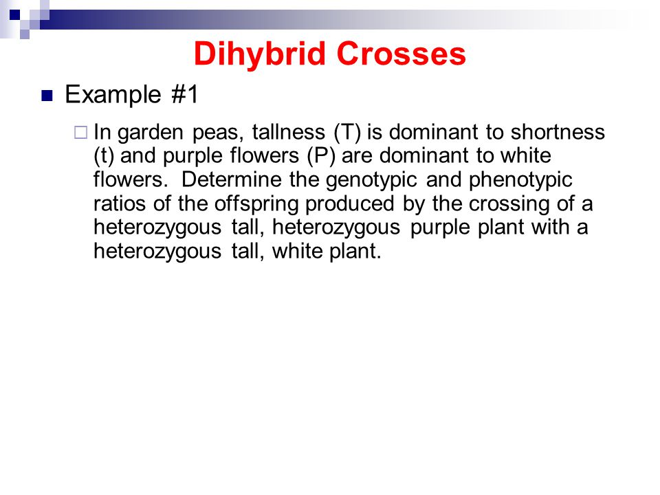 Dihybrid Crosses Example #1  In garden peas, tallness (T) is dominant to shortness (t) and purple flowers (P) are dominant to white flowers.
