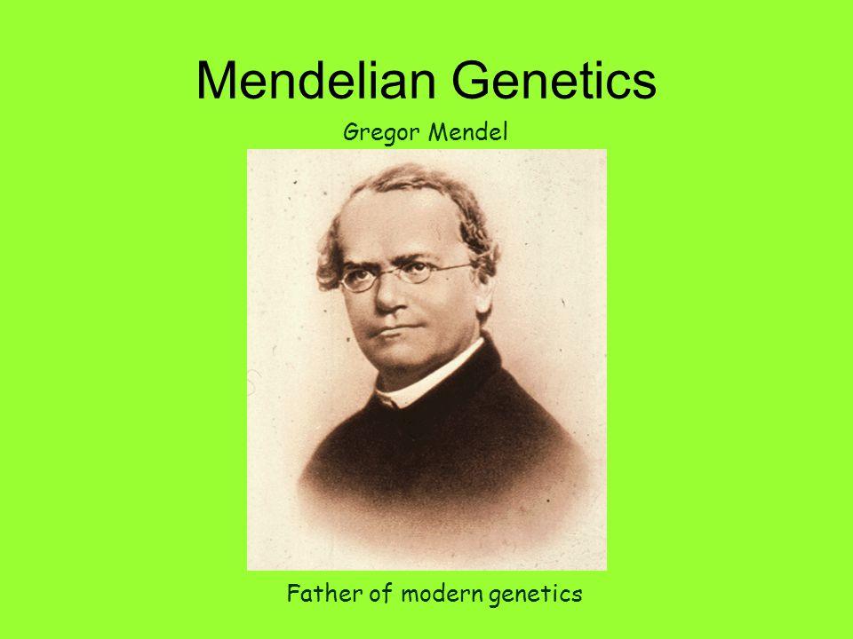 Mendelian Genetics Father of modern genetics Gregor Mendel
