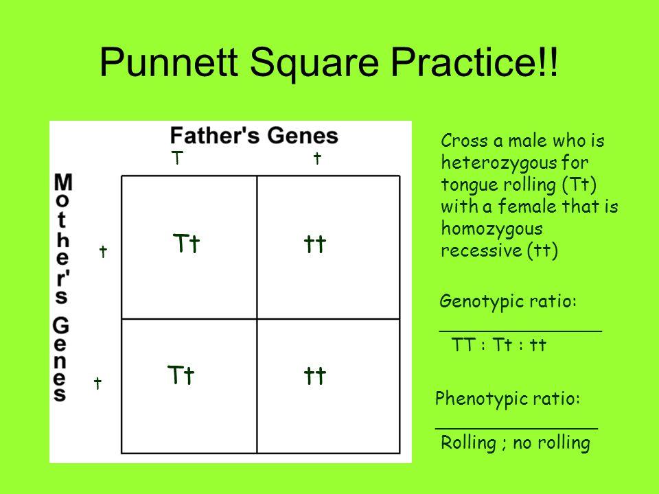 Punnett Square Practice!! Cross a male who is heterozygous for tongue rolling (Tt) with a female that is homozygous recessive (tt) Tt t t Tttt Tttt Ge