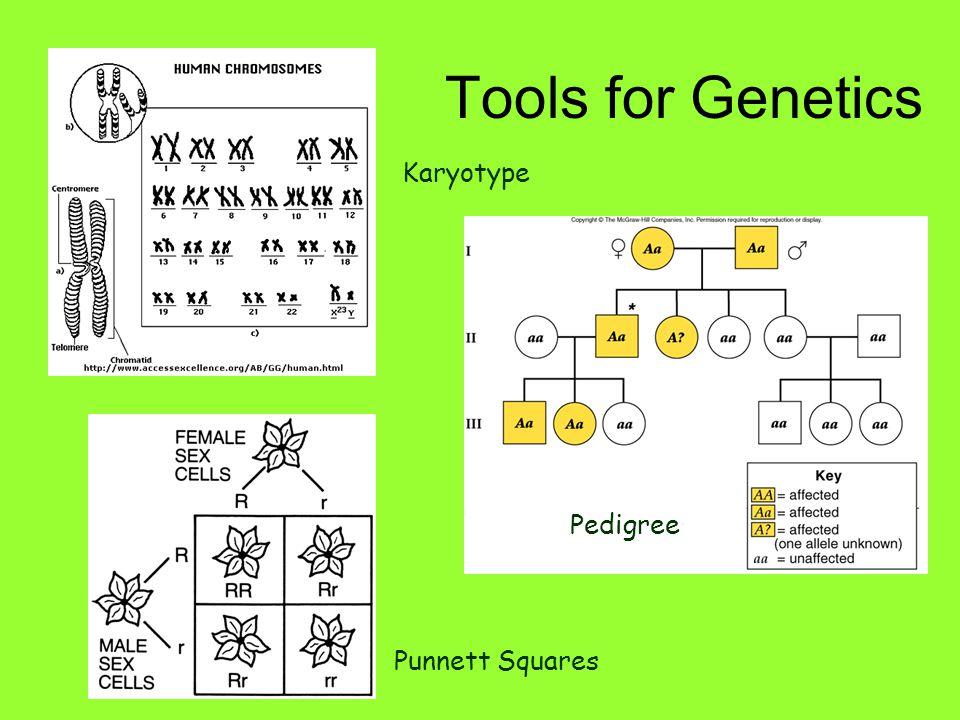 Tools for Genetics Pedigree Karyotype Punnett Squares