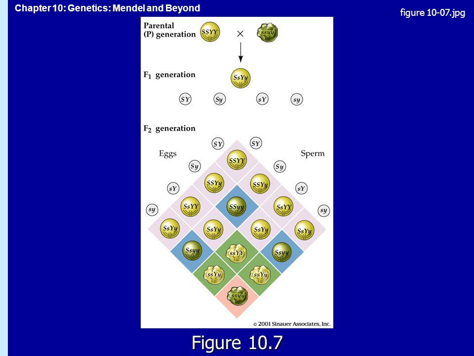 Chapter 10: Genetics: Mendel and Beyond Figure 10.7 figure 10-07.jpg