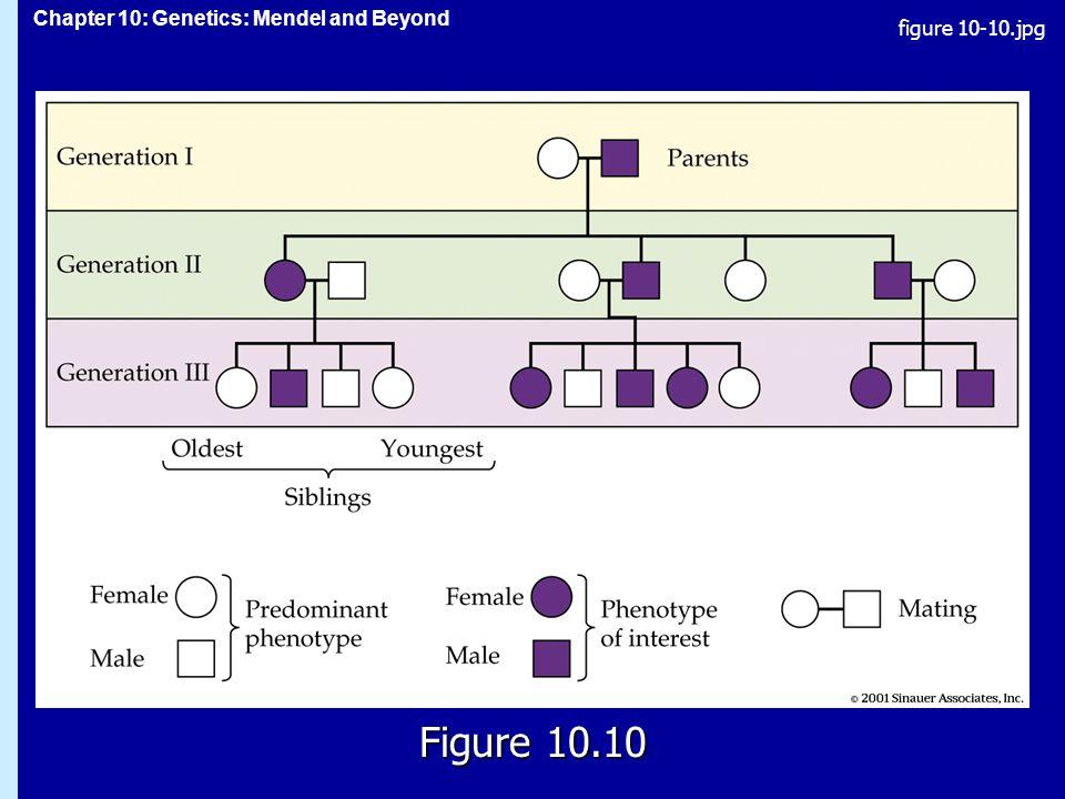 Chapter 10: Genetics: Mendel and Beyond Figure 10.10 figure 10-10.jpg