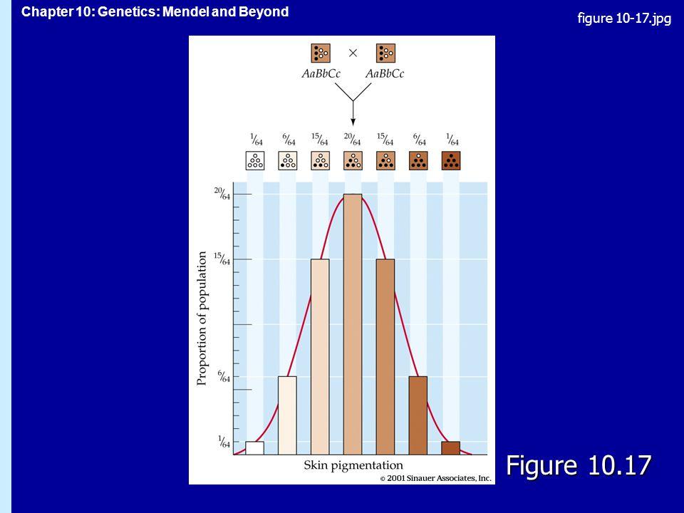Chapter 10: Genetics: Mendel and Beyond Figure 10.17 figure 10-17.jpg
