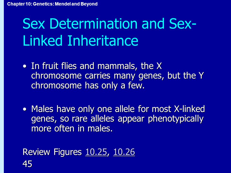 Chapter 10: Genetics: Mendel and Beyond Sex Determination and Sex- Linked Inheritance In fruit flies and mammals, the X chromosome carries many genes,