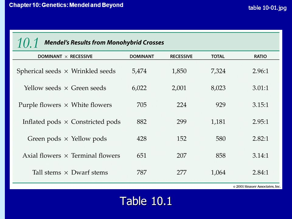 Chapter 10: Genetics: Mendel and Beyond Alleles and Their Interactions Dominance is usually not complete, since both alleles in a heterozygous organism may be expressed in the phenotype.Dominance is usually not complete, since both alleles in a heterozygous organism may be expressed in the phenotype.