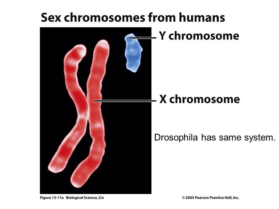 Drosophila has same system.