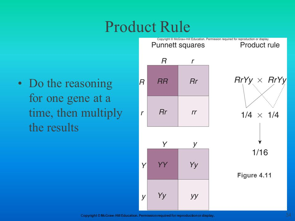 Copyright © McGraw-Hill Education. Permission required for reproduction or display. Product Rule Do the reasoning for one gene at a time, then multipl