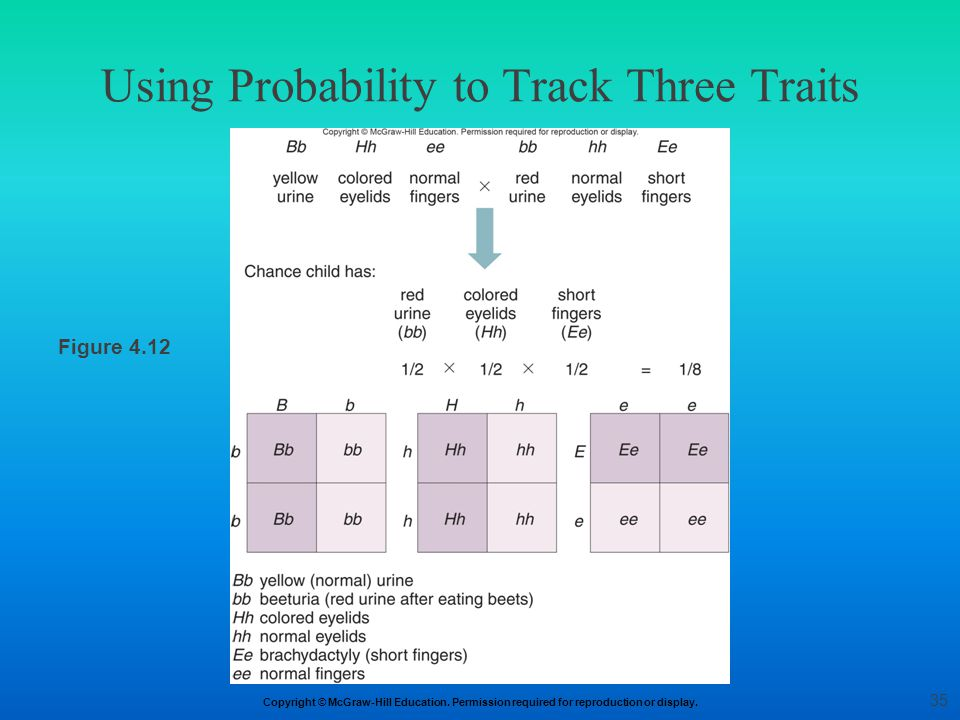 Copyright © McGraw-Hill Education. Permission required for reproduction or display. Using Probability to Track Three Traits Figure 4.12 35