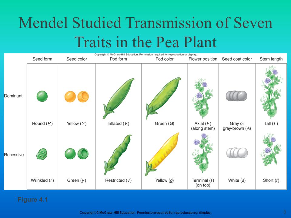 Copyright © McGraw-Hill Education. Permission required for reproduction or display. Mendel Studied Transmission of Seven Traits in the Pea Plant Figur