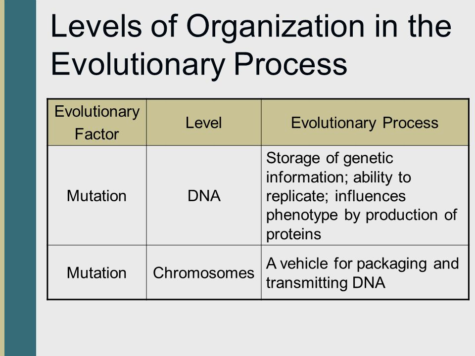 Levels of Organization in the Evolutionary Process Evolutionary Factor LevelEvolutionary Process MutationDNA Storage of genetic information; ability t