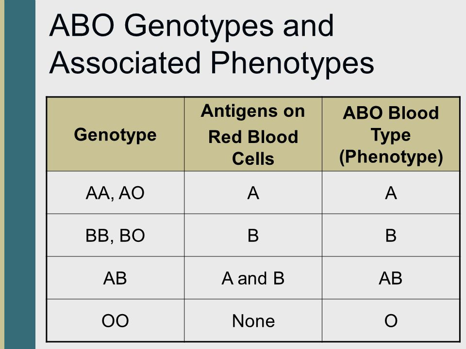 ABO Genotypes and Associated Phenotypes Genotype Antigens on Red Blood Cells ABO Blood Type (Phenotype) AA, AOAA BB, BOBB ABA and BAB OONoneO