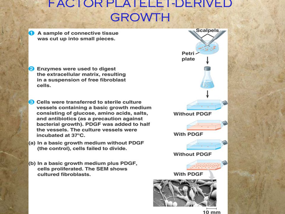FACTOR PLATELET-DERIVED GROWTH