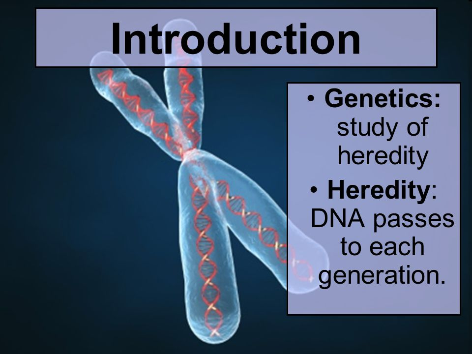 Introduction Genetics: study of heredity Heredity: DNA passes to each generation.