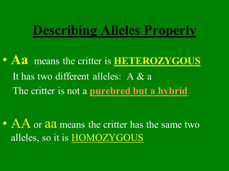 Describing Alleles Properly Aa means the critter is HETEROZYGOUS It has two different alleles: A & a The critter is not a purebred but a hybrid AA or aa means the critter has the same two alleles, so it is HOMOZYGOUS