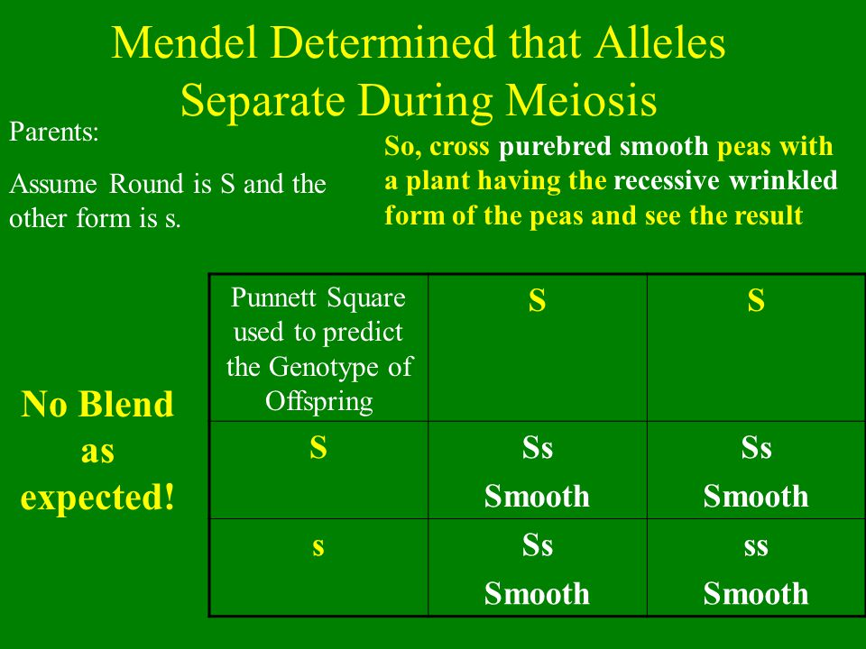 Mendel's Hypotheses 1.There are alternate forms of 'genes' = alleles 2.For each trait, organisms have 2 genes, one from mom & one from dad 3.Sperm and egg each carry 1 allele/trait because alleles separate 4.Dominant alleles mask the effects or recessive alleles
