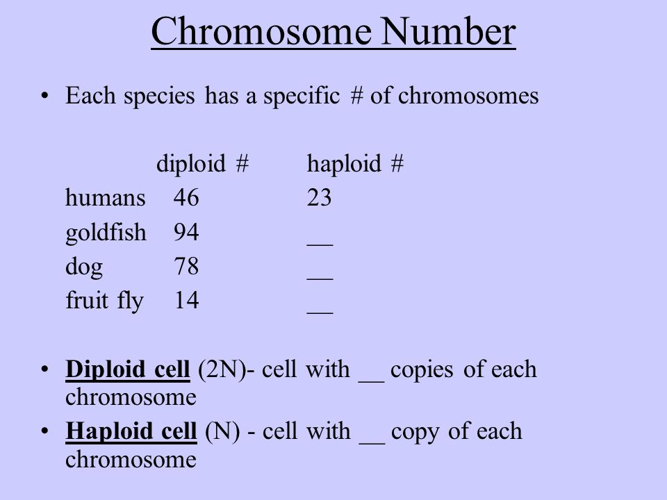 Chromosome Number Each species has a specific # of chromosomes diploid #haploid # humans4623 goldfish94__ dog78__ fruit fly14__ Diploid cell (2N)- cel