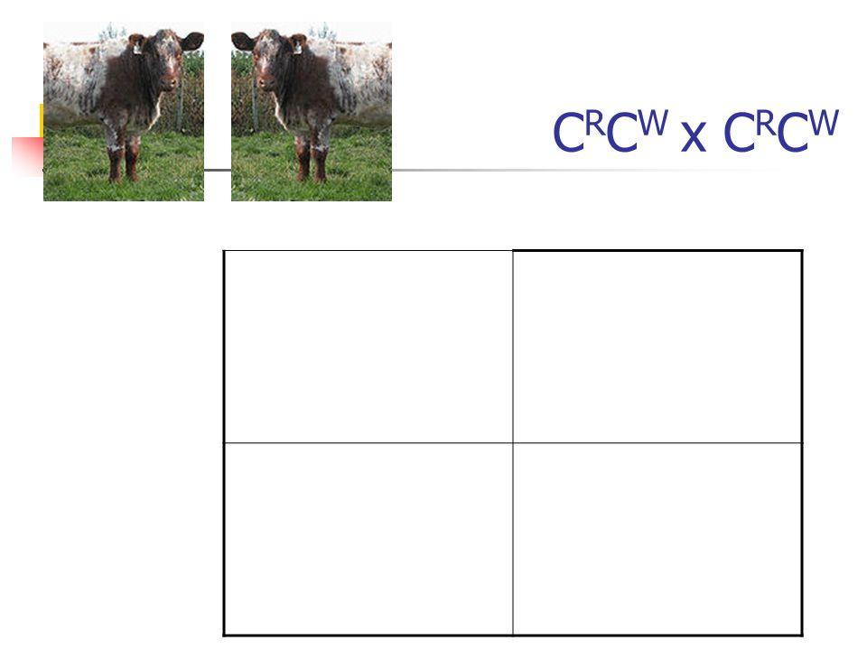 C R C W x C R C W