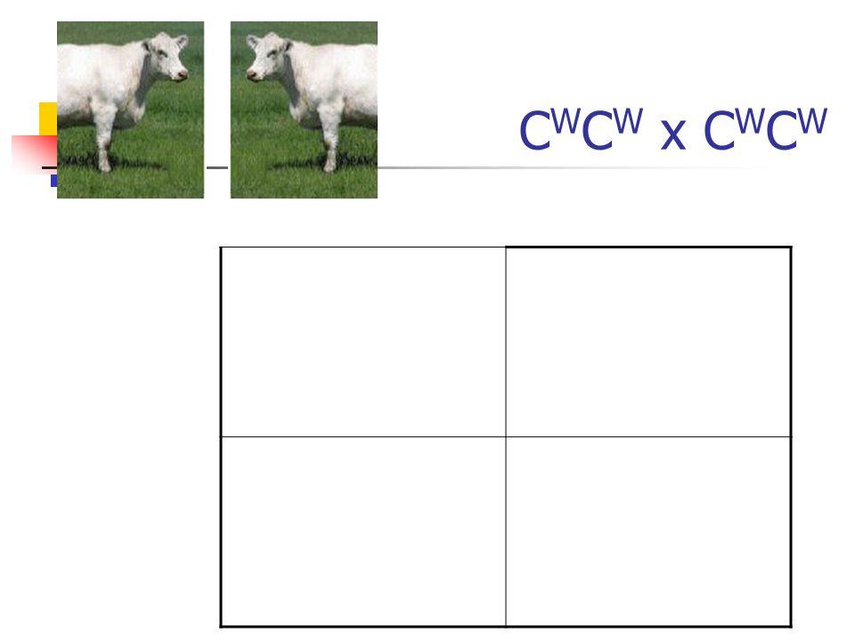 C W C W x C W C W