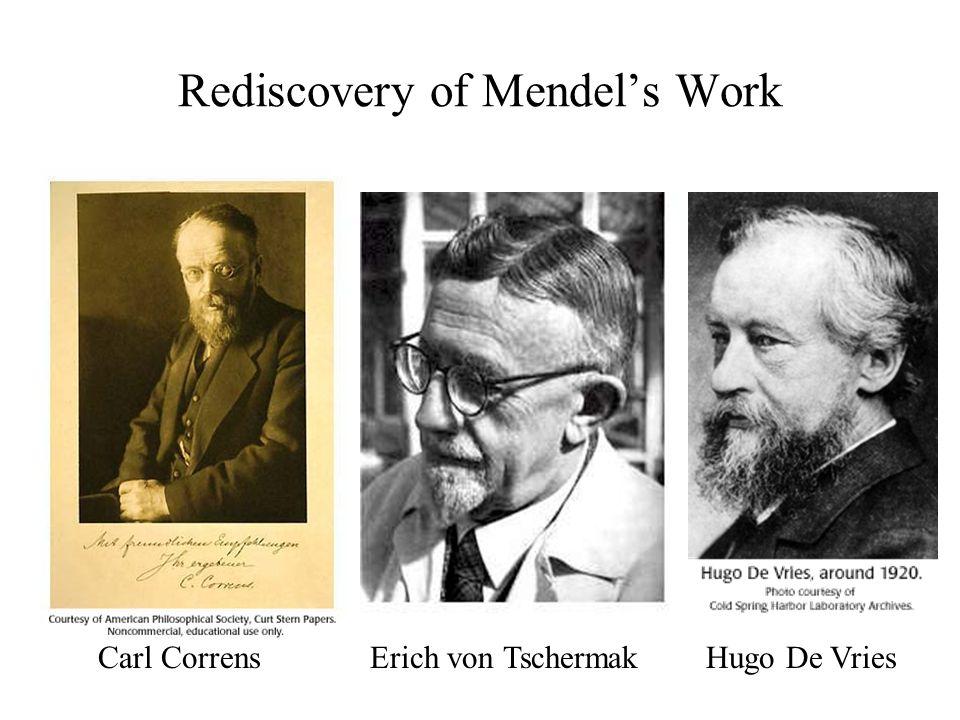 Rediscovery of Mendel's Work Carl Correns Erich von Tschermak Hugo De Vries