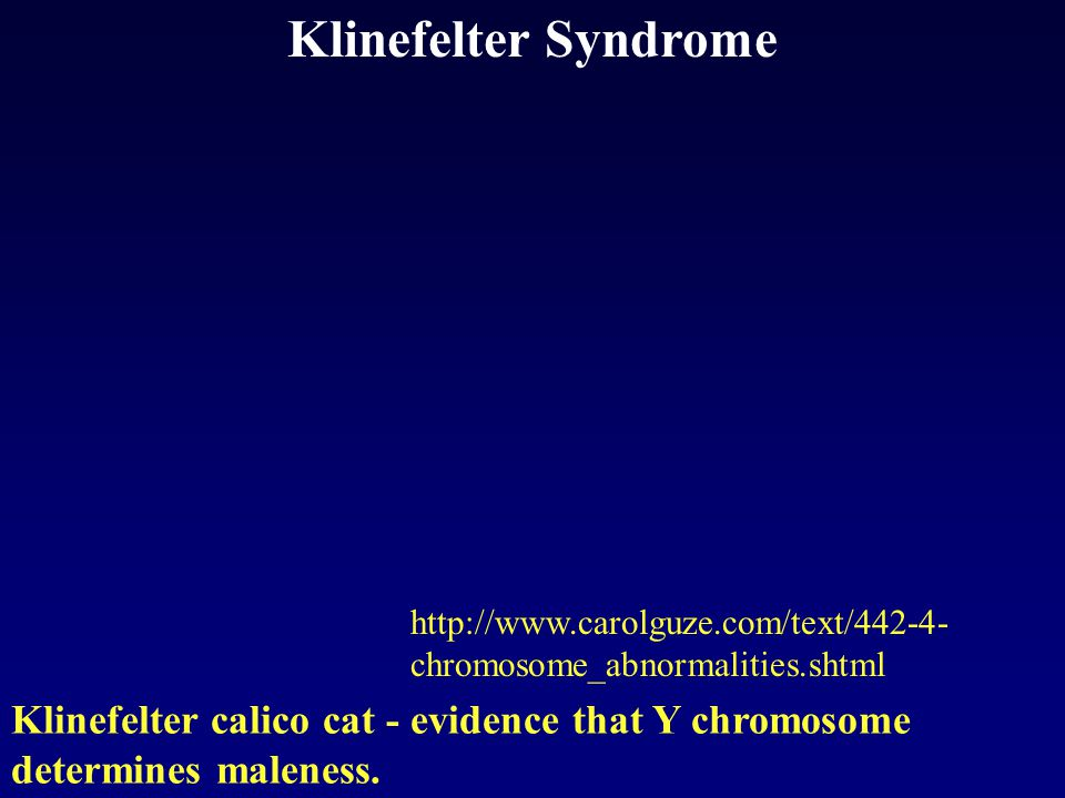 Klinefelter Syndrome http://www.carolguze.com/text/442-4- chromosome_abnormalities.shtml Klinefelter calico cat - evidence that Y chromosome determines maleness.