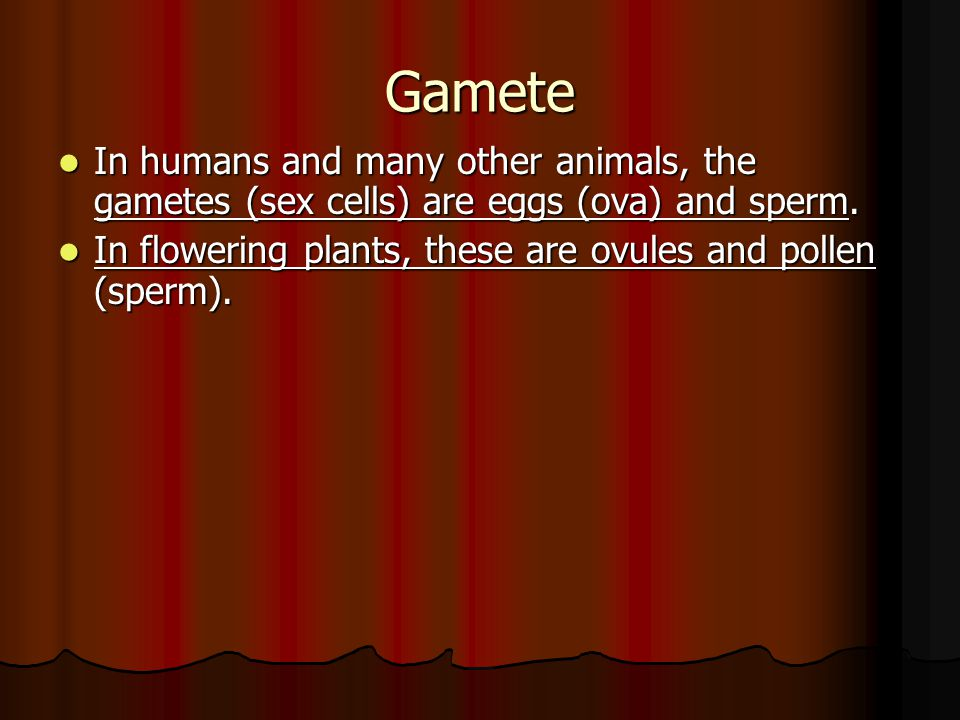 Gamete In humans and many other animals, the gametes (sex cells) are eggs (ova) and sperm.