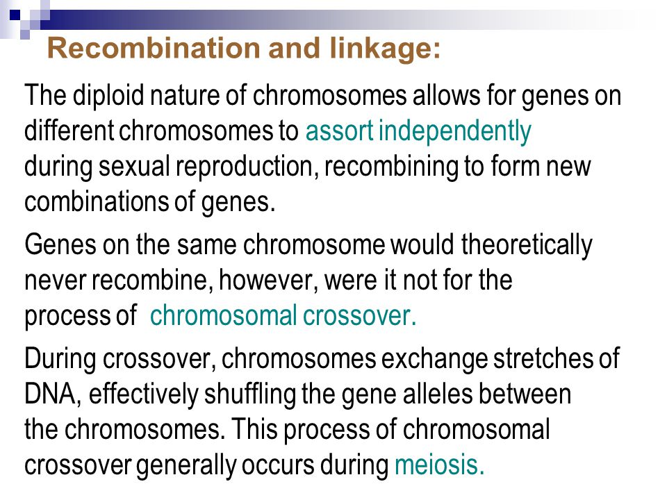 Recombination and linkage: The diploid nature of chromosomes allows for genes on different chromosomes to assort independently during sexual reproduction, recombining to form new combinations of genes.