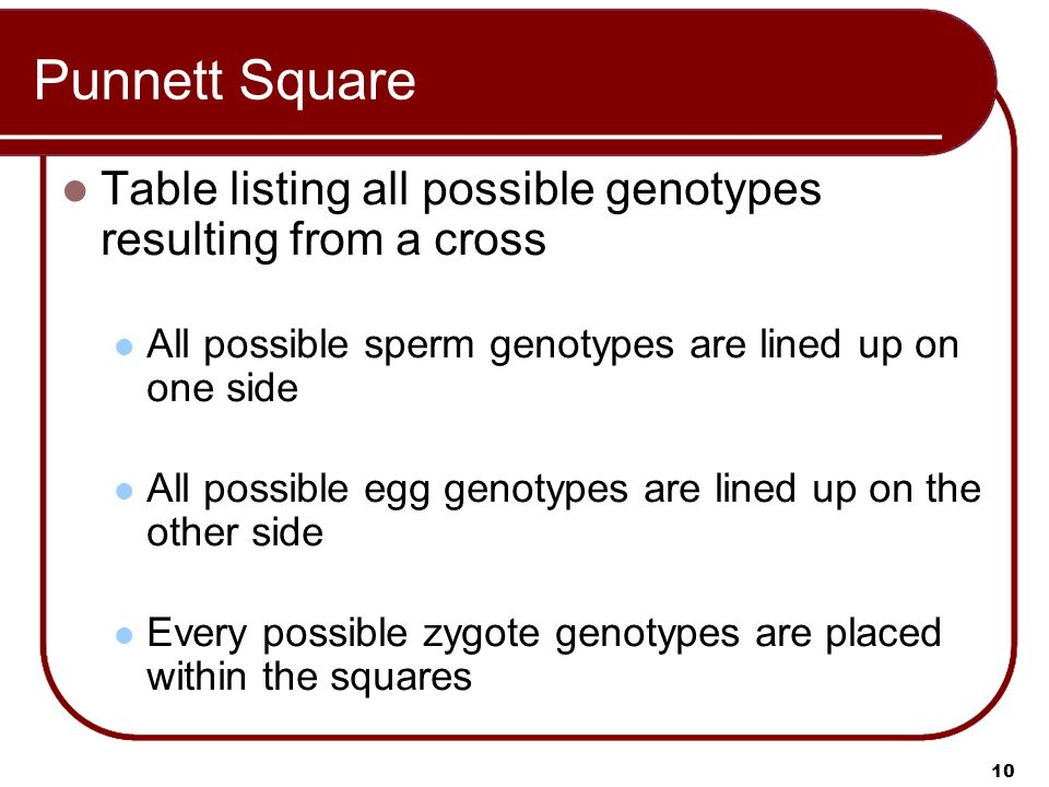 10 Punnett Square Table listing all possible genotypes resulting from a cross All possible sperm genotypes are lined up on one side All possible egg genotypes are lined up on the other side Every possible zygote genotypes are placed within the squares