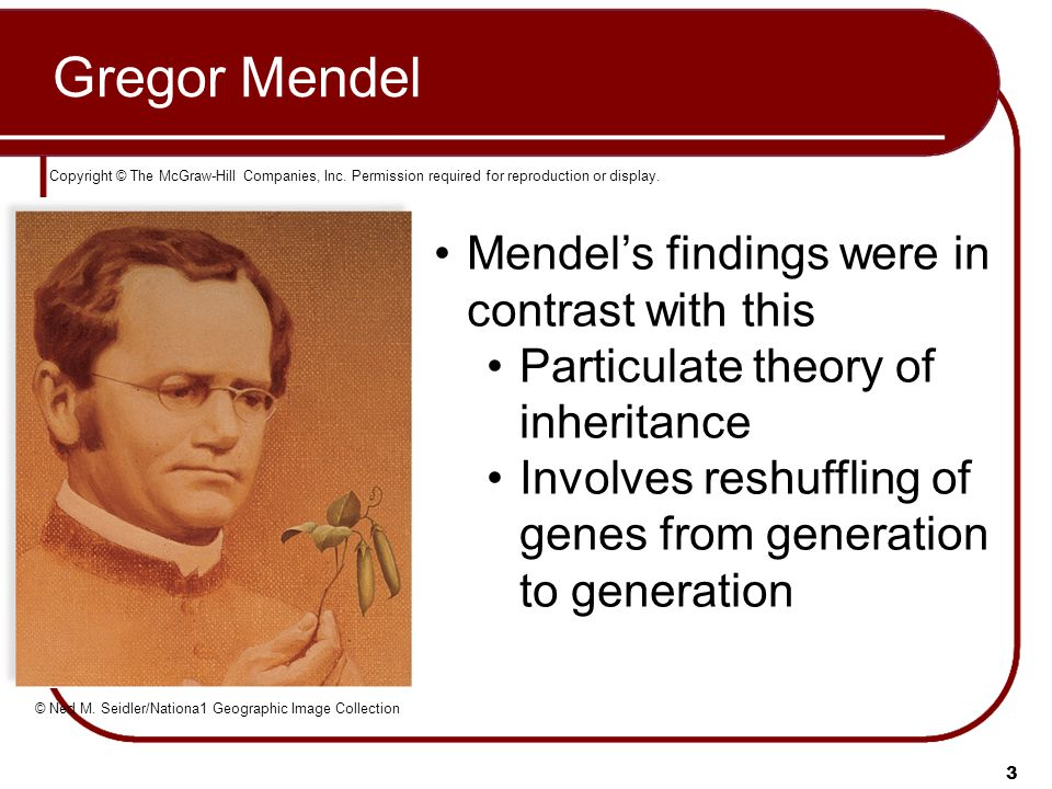 3 Gregor Mendel Copyright © The McGraw-Hill Companies, Inc. Permission required for reproduction or display. © Ned M. Seidler/Nationa1 Geographic Imag
