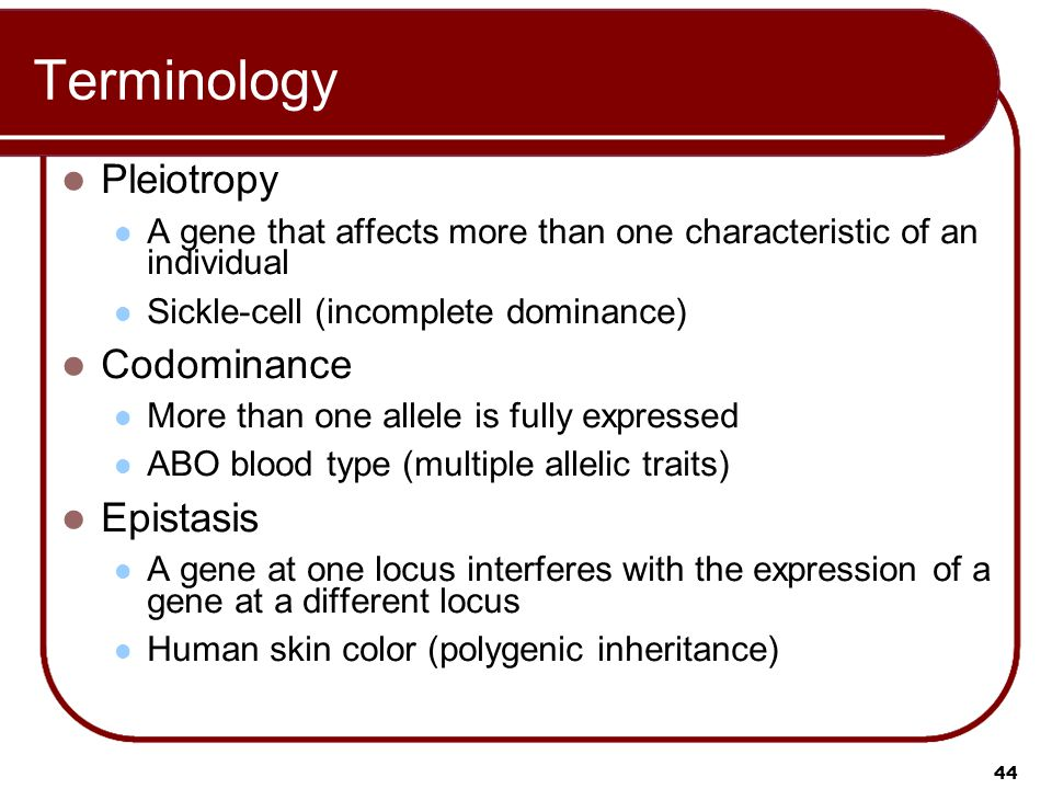 44 Terminology Pleiotropy A gene that affects more than one characteristic of an individual Sickle-cell (incomplete dominance) Codominance More than one allele is fully expressed ABO blood type (multiple allelic traits) Epistasis A gene at one locus interferes with the expression of a gene at a different locus Human skin color (polygenic inheritance)