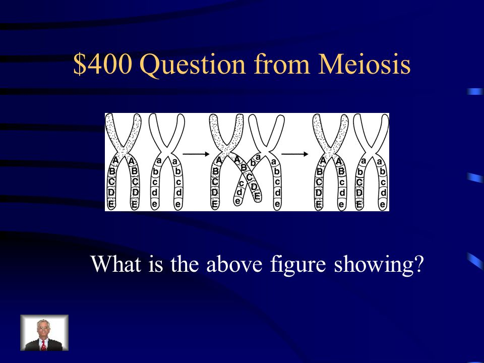 $300 Answer from Meiosis Are on the same chromosome