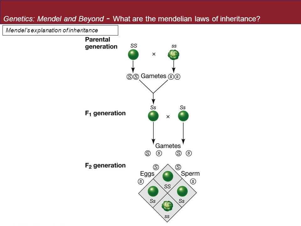 Mendel's explanation of inheritance