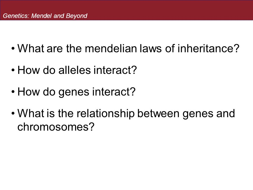 Genetics: Mendel and Beyond - How do genes interact? Genes may interact epistatically
