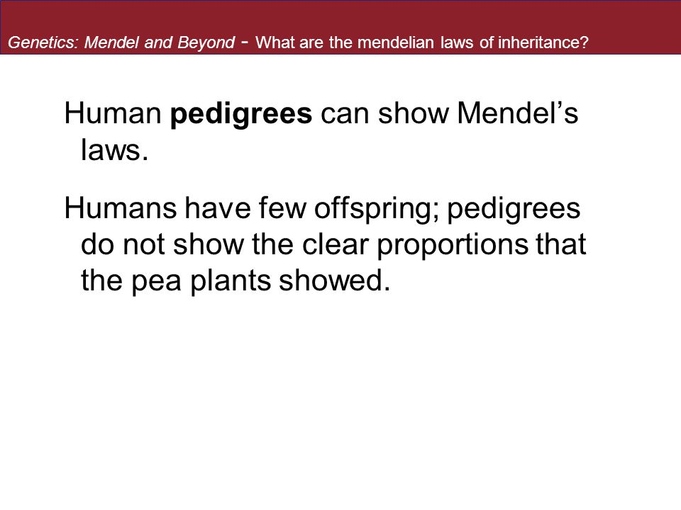 Human pedigrees can show Mendel's laws.