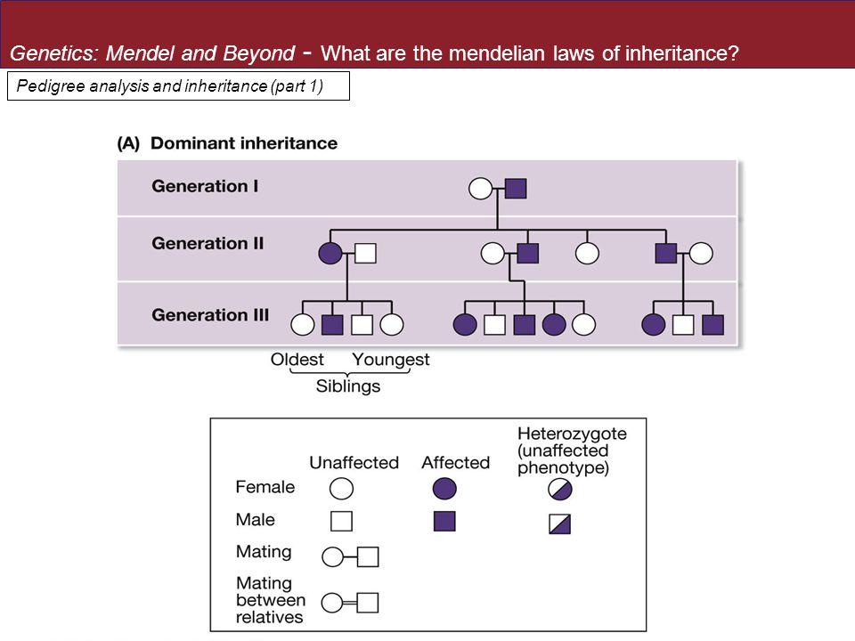 Pedigree analysis and inheritance (part 1)