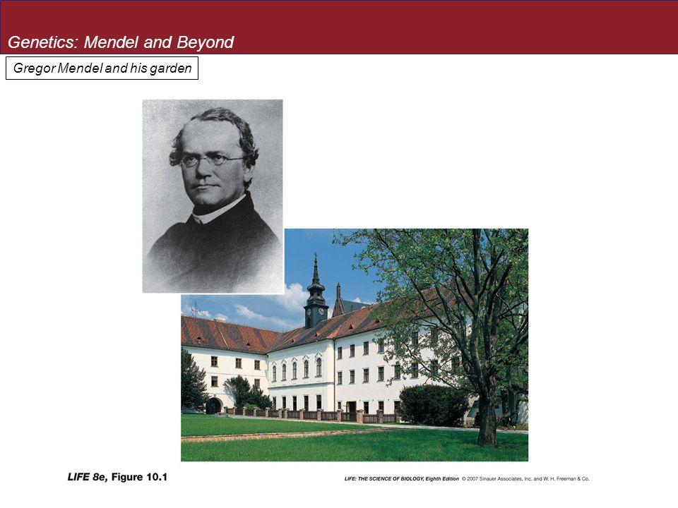 Gregor Mendel and his garden