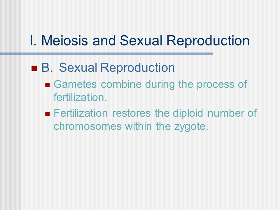 I. Meiosis and Sexual Reproduction B.Sexual Reproduction Gametes combine during the process of fertilization. Fertilization restores the diploid numbe