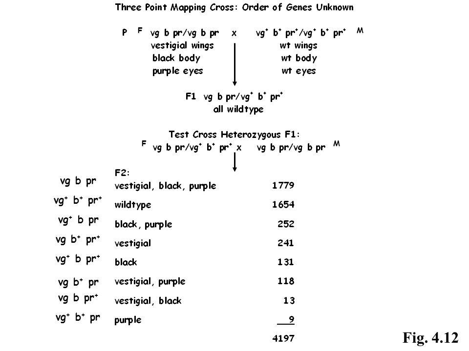 vg b pr vg + b + pr + vg + b pr vg b + pr + vg + b pr + vg b + pr vg b pr + vg + b + pr F F M M Fig. 4.12