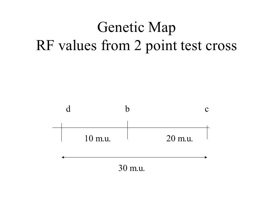 Genetic Map RF values from 2 point test cross d b c 10 m.u. 20 m.u. 30 m.u.