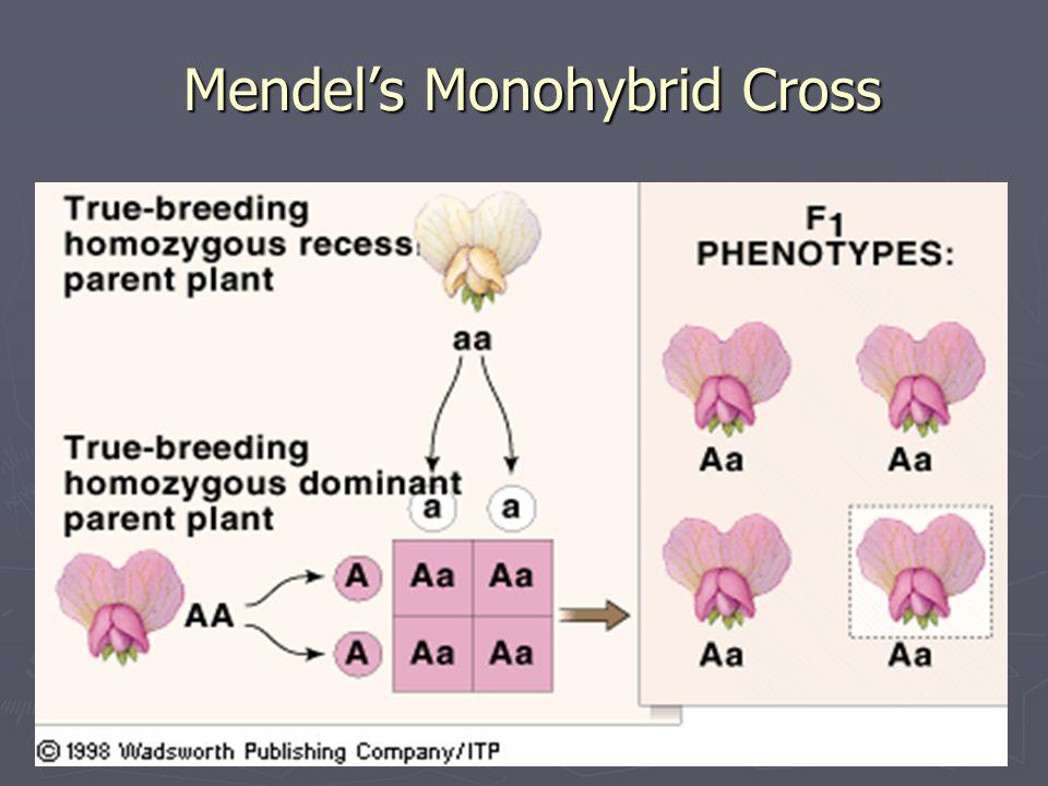 Mendel's Monohybrid Cross
