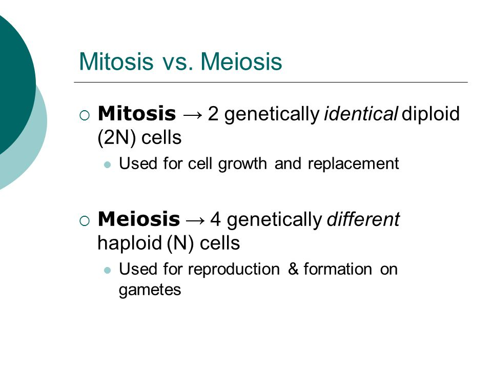 Mitosis vs. Meiosis  Mitosis → 2 genetically identical diploid (2N) cells Used for cell growth and replacement  Meiosis → 4 genetically different ha