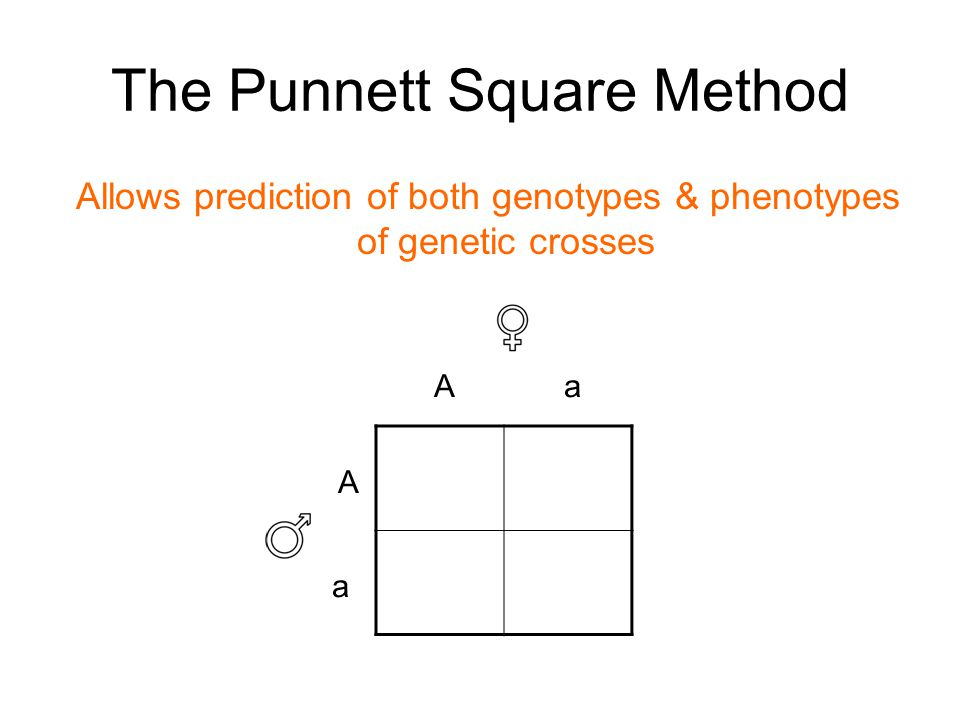 The Punnett Square Method Allows prediction of both genotypes & phenotypes of genetic crosses A a aA