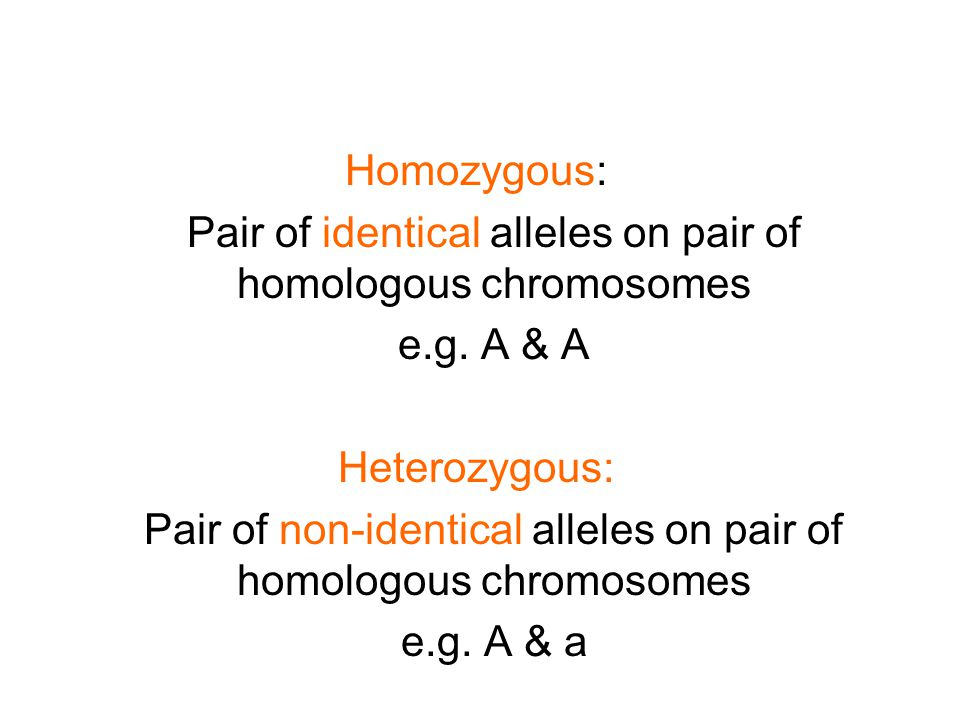 Homozygous: Pair of identical alleles on pair of homologous chromosomes e.g.