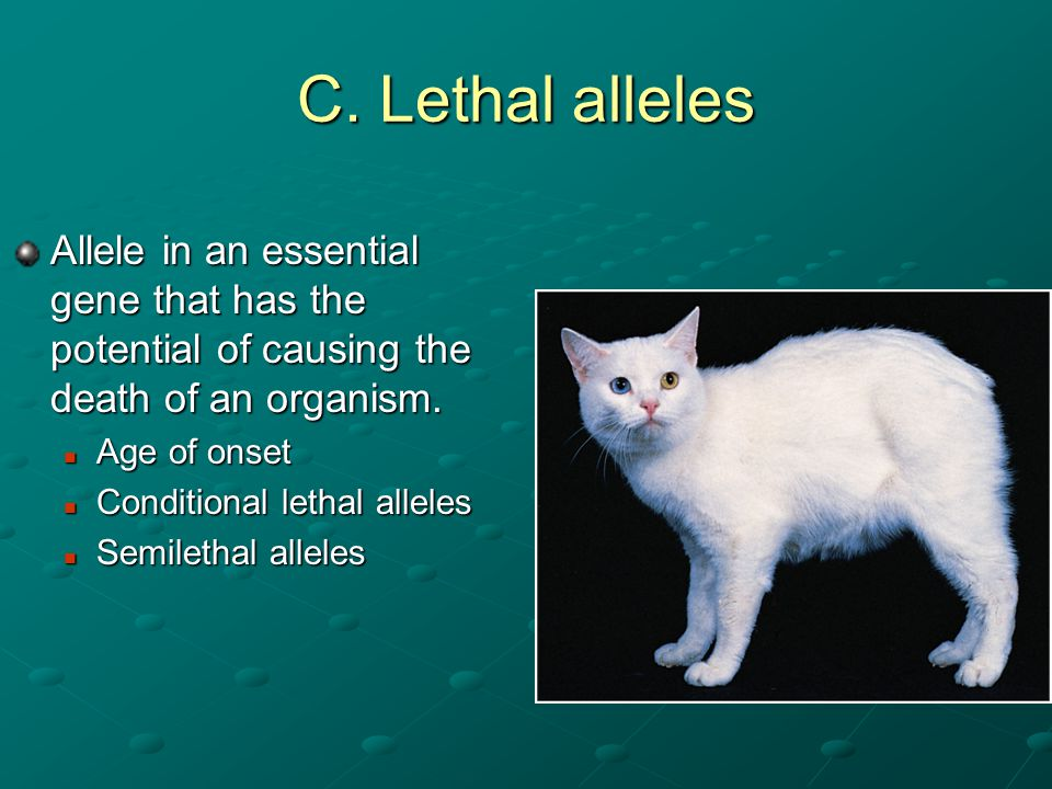 Codominance  Specific type of multiple alleles, when two alleles are equally expressed in the heterozygous individual e.g.